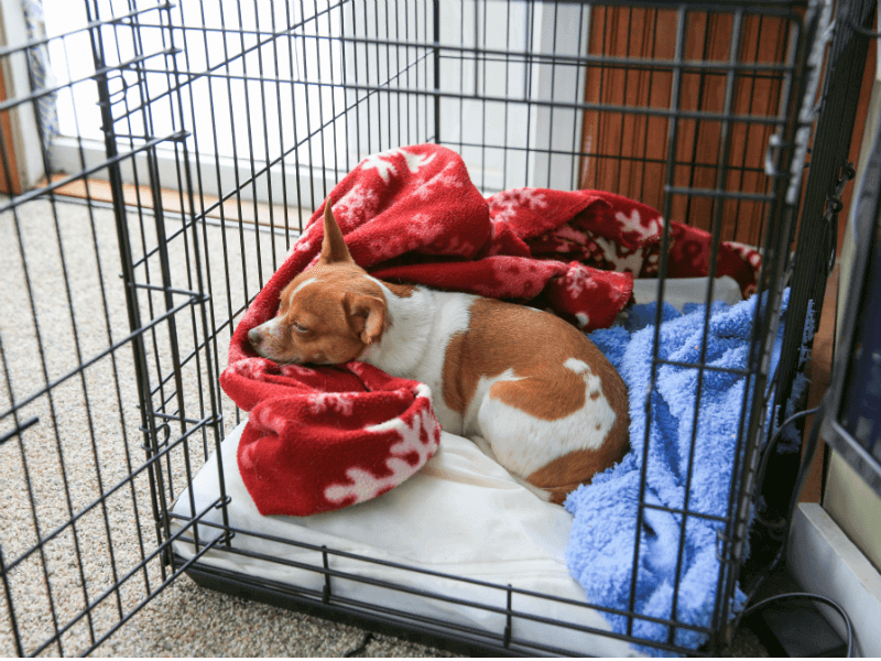 You Put A Dog Bed In Your S Crate, What Bedding For Puppy Crate